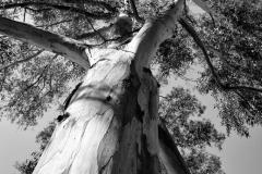 Xaviers Tree