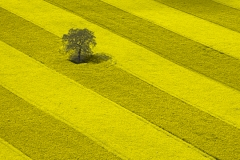 Rape field from helicopter